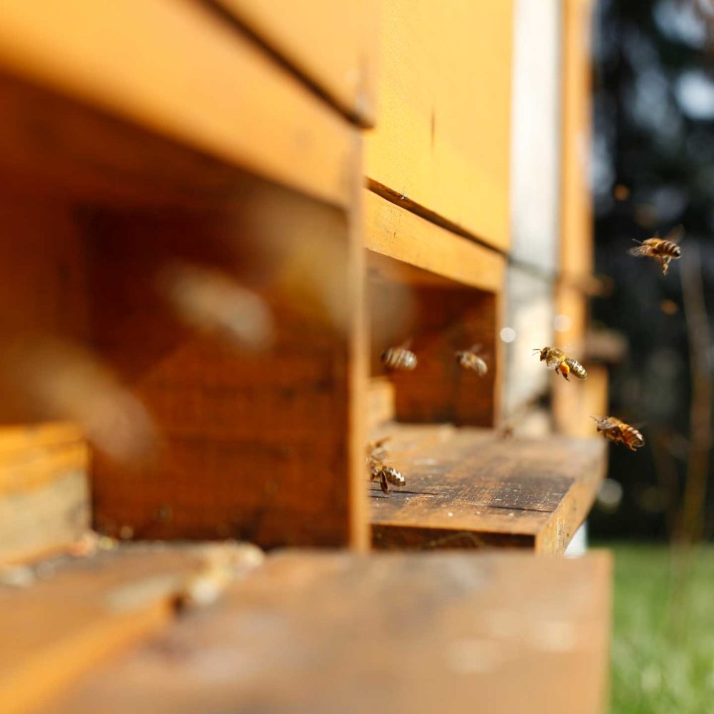 Bienenstock