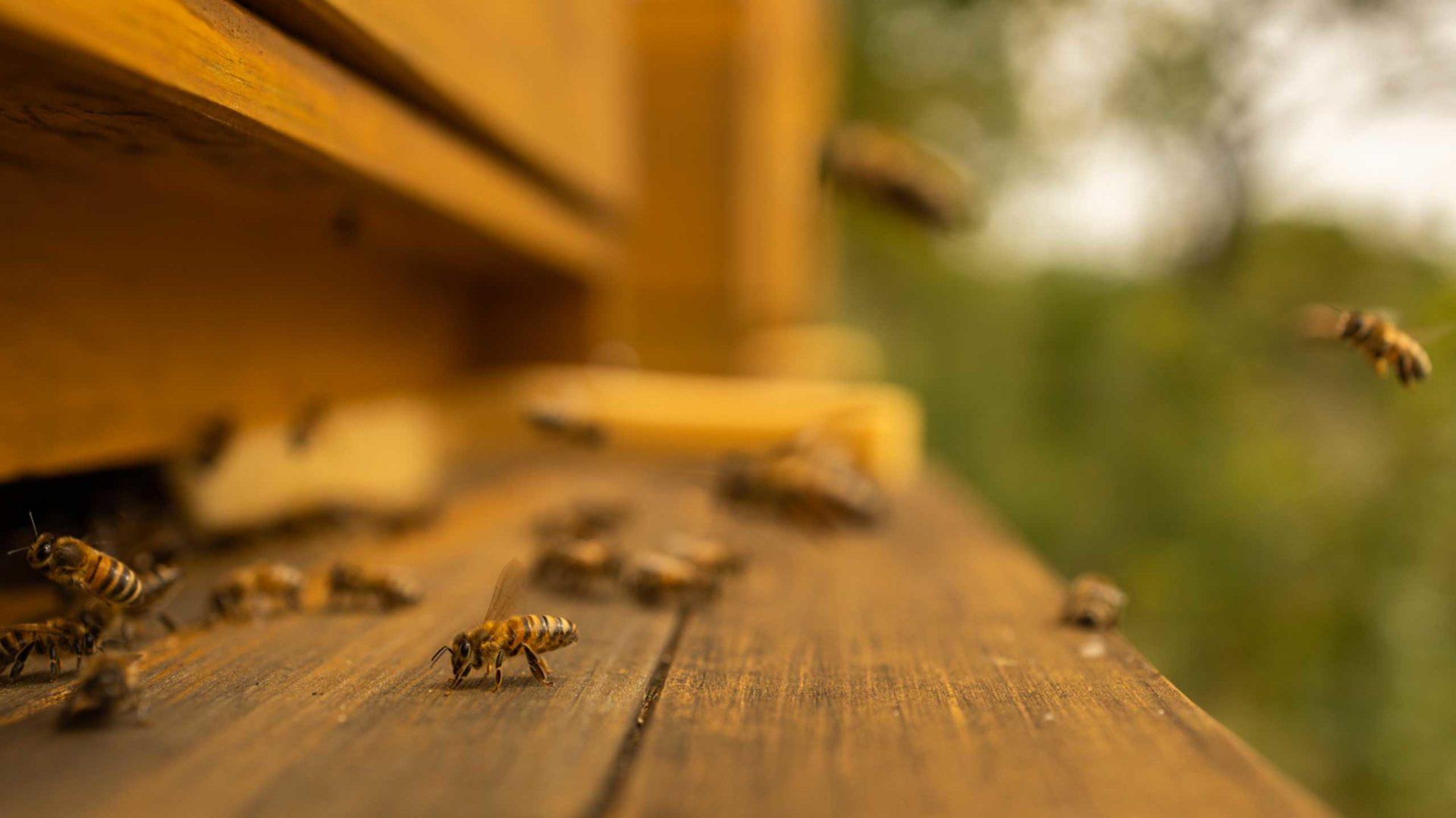 Nahaufnahme der Einflugschneise der Bienen