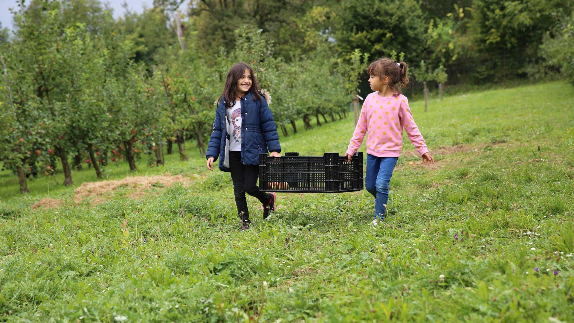 Zwei fleißige Apfelpflücker laufen mit einer Kiste über die Wiese.