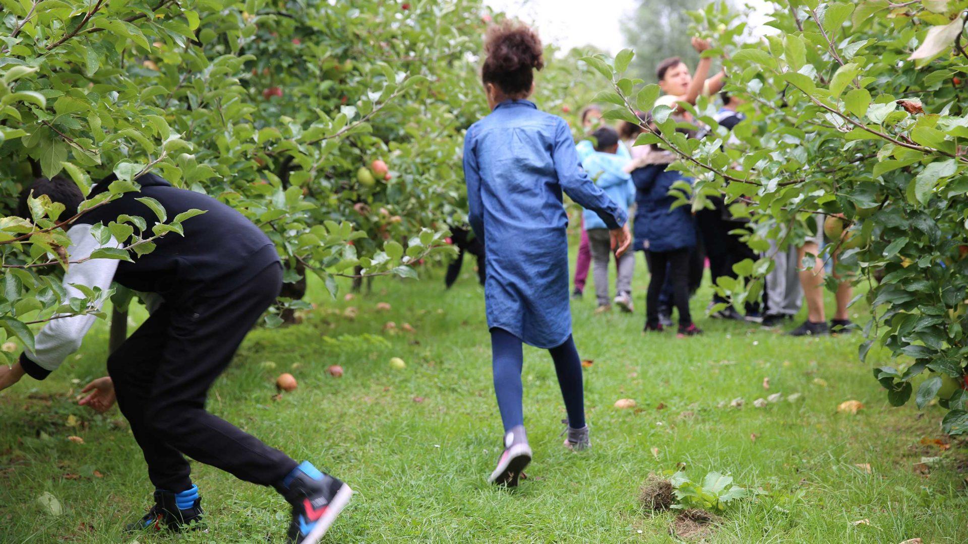 Alle Kinder sammeln Äpfel auf den Frankfurter Steuobstwiesen am Lohrberg.