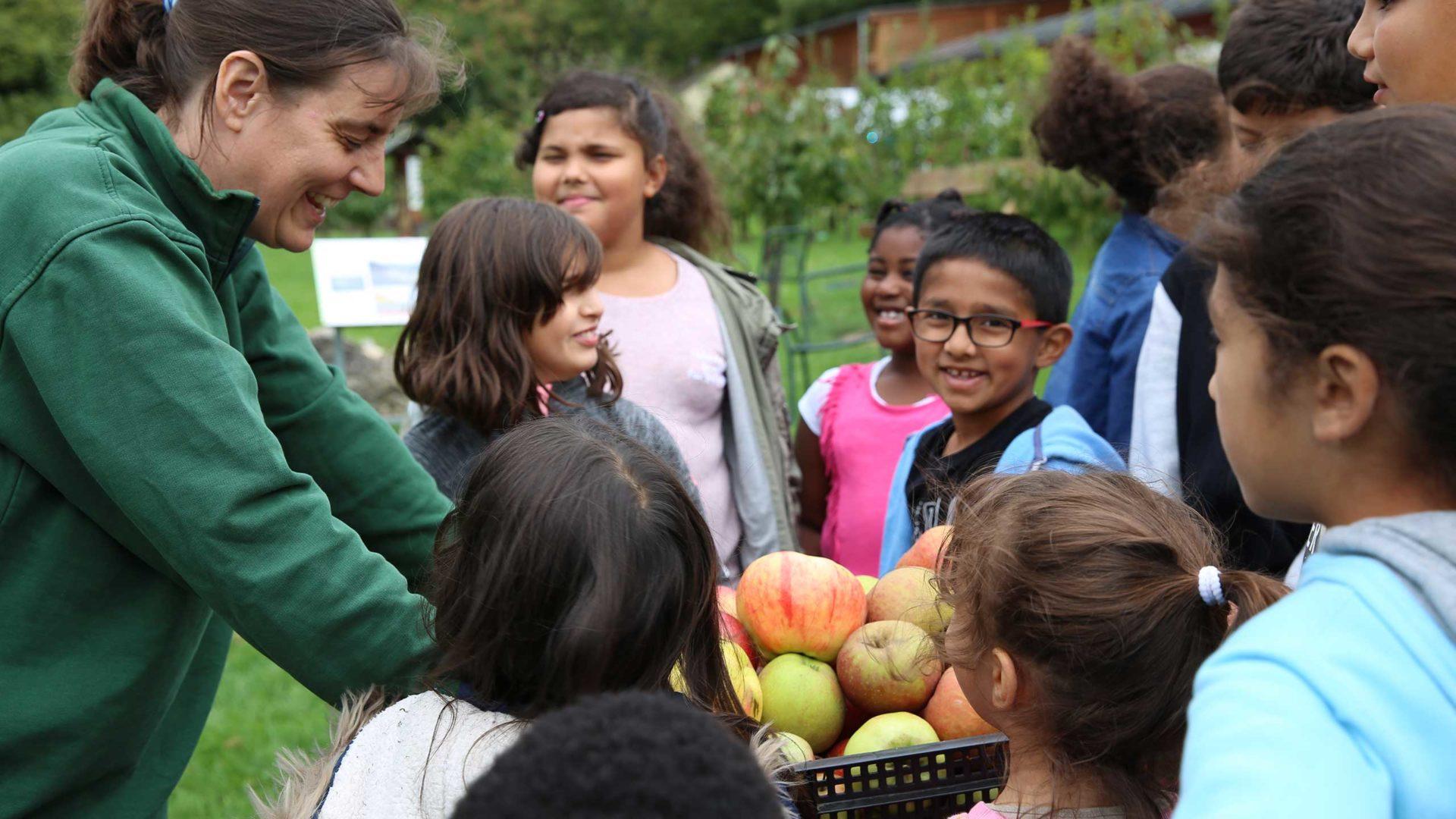 Bei der MILK. Mahlzeit Aktion werden die gesammelten Äpfel bestaunt.