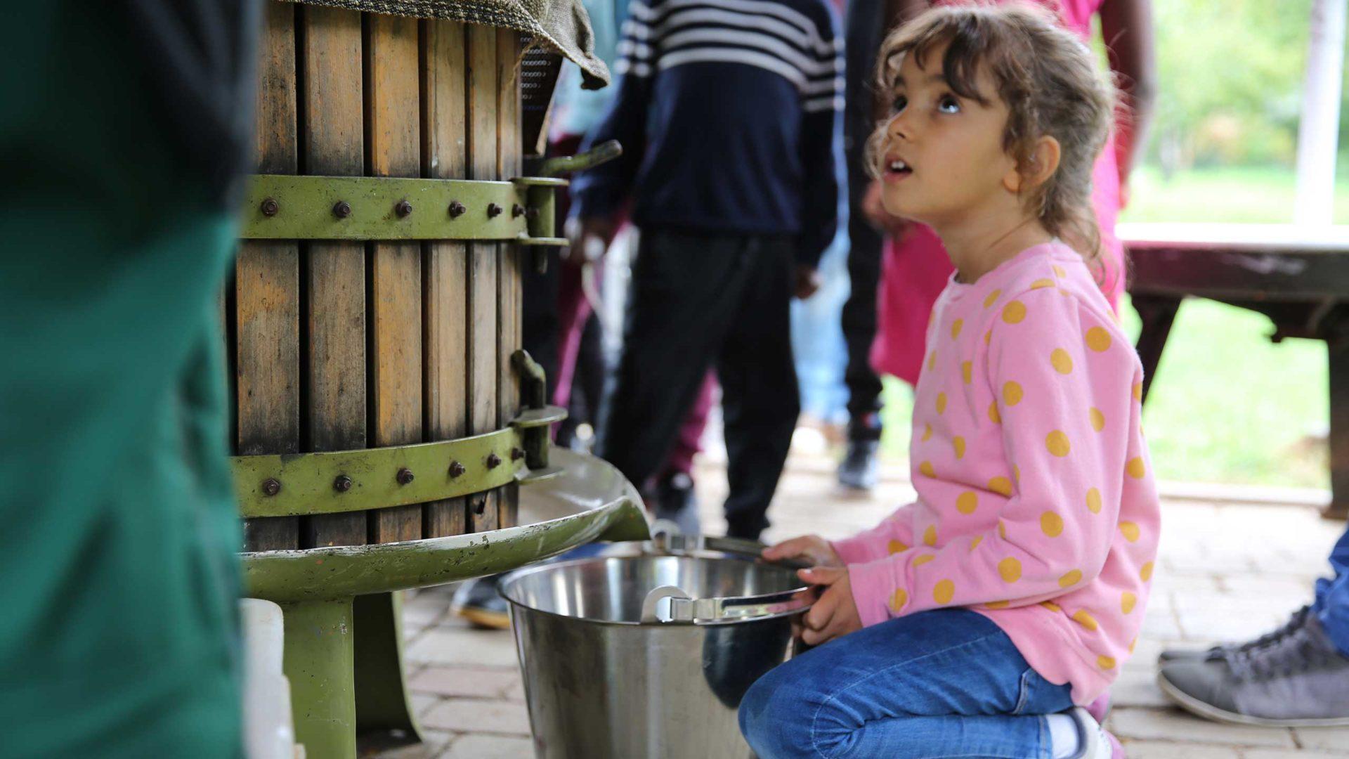 Selbstgekelterter Apfelsaft wird aus der Obstpresse in einen Eimer geleitet.