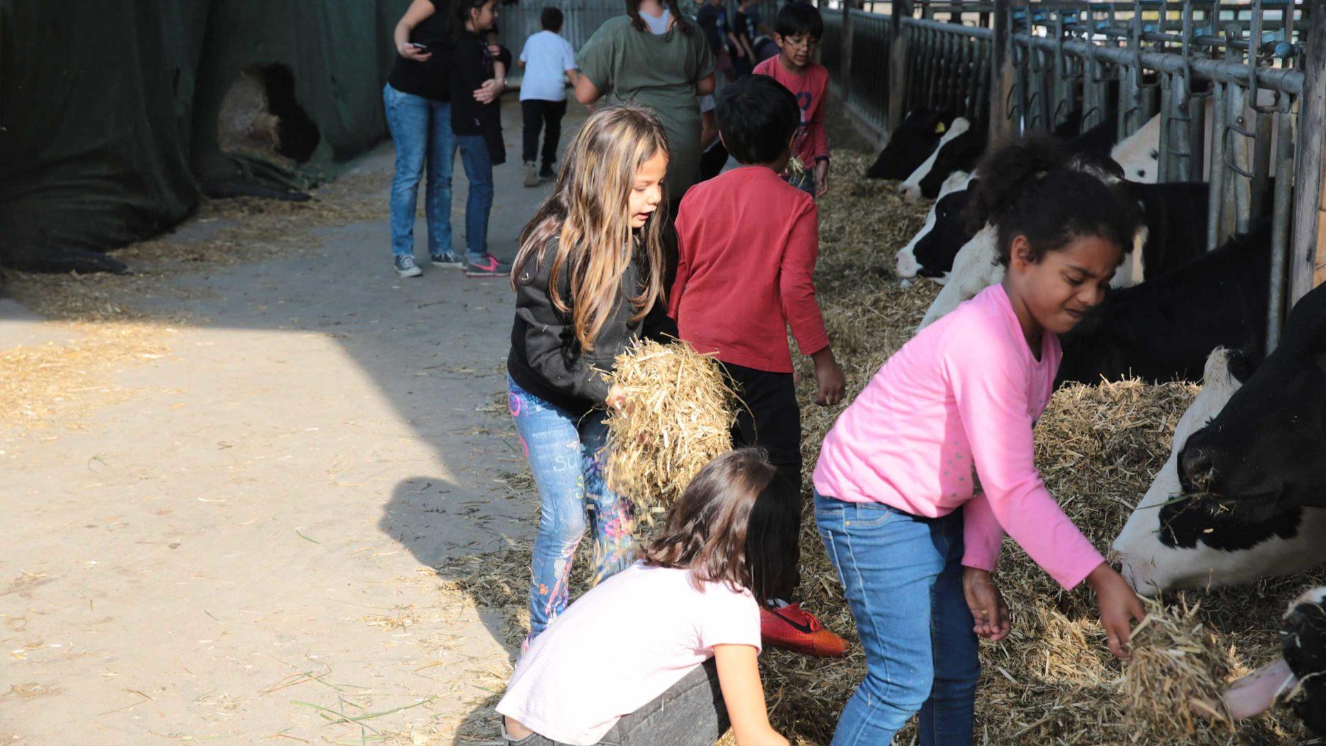 Aktion Mahlzeit auf dem Milchhof. Die Kinder kommen ganz nah an die Kühe heran und können diese sogar füttern.