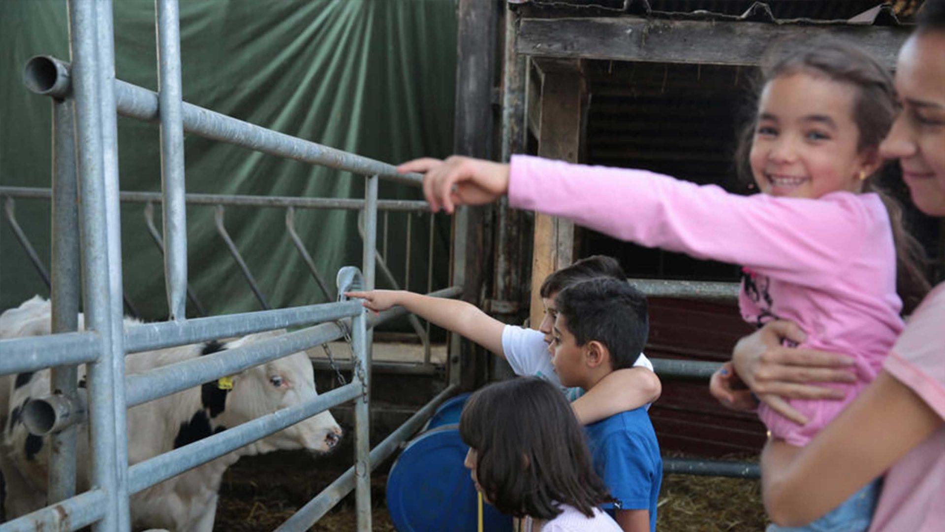 Die Kidner freuen sich so nah an die Kühe heran kommen zu können.