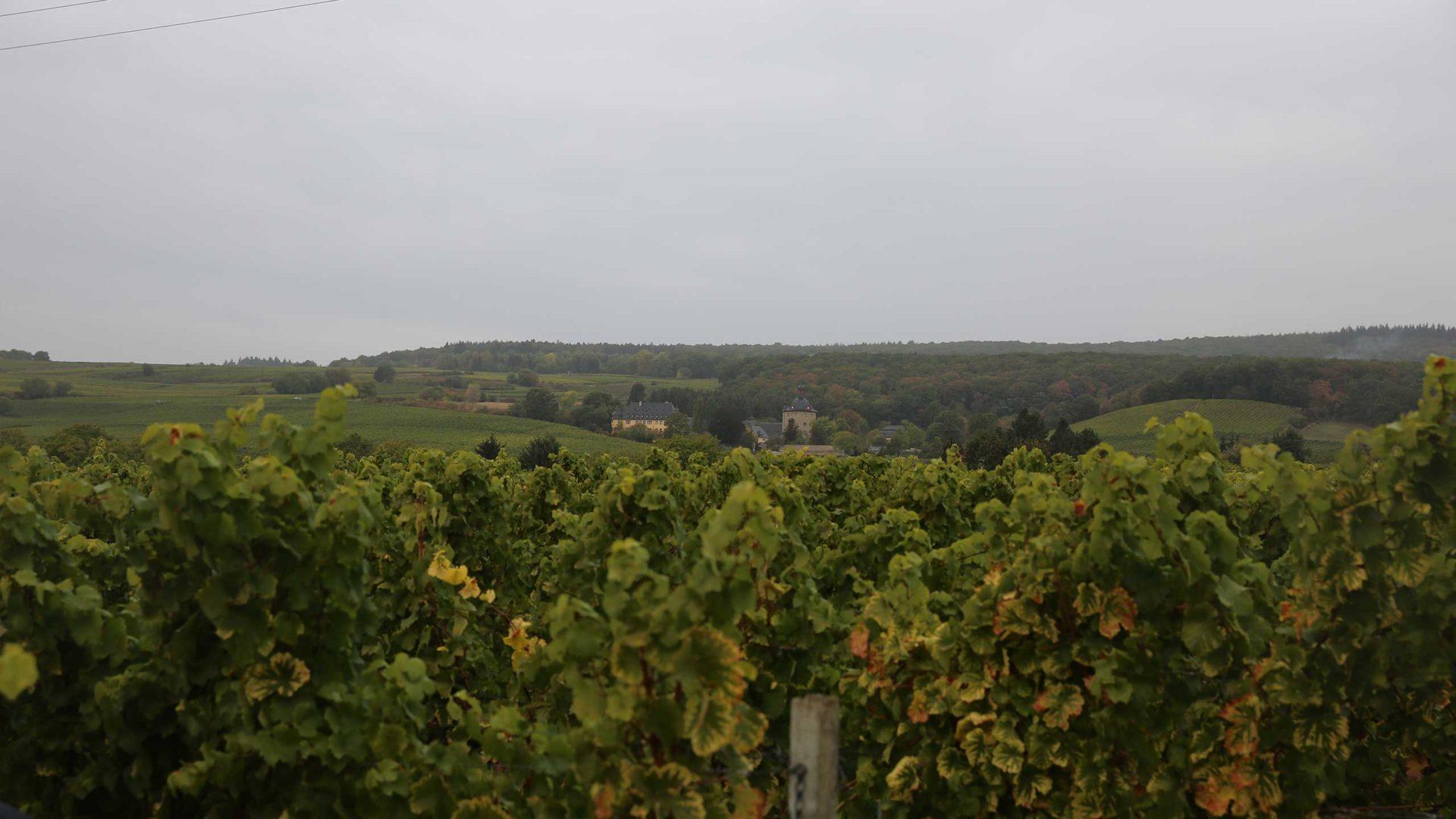 Landschaftsaufnahme der Umgebung des Jesuitengartens.