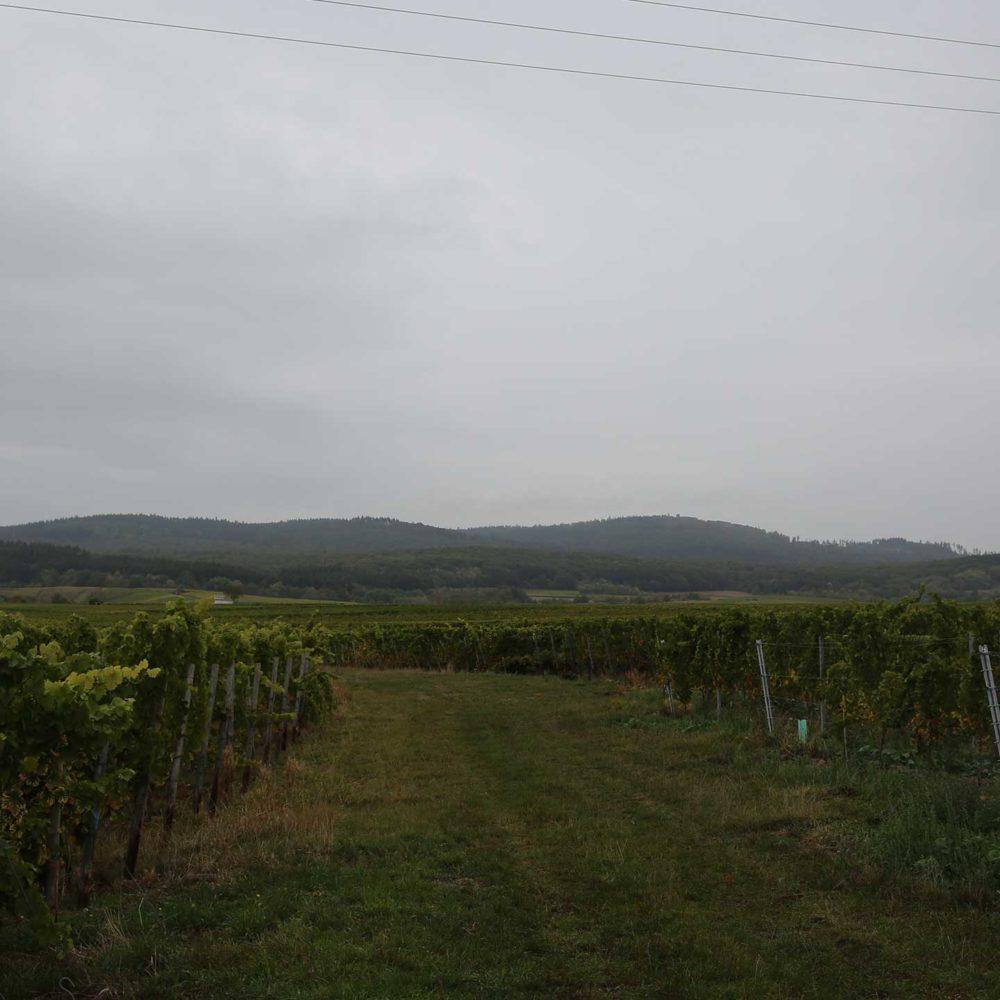 Weinrebenlandschaft